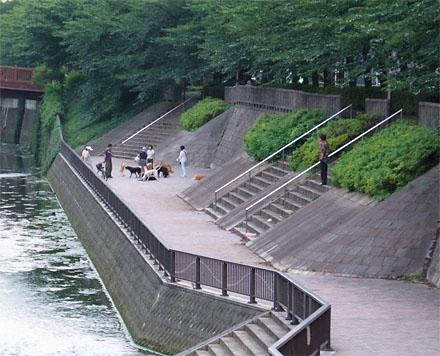 D0709shakujiigawa09